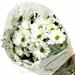 Chrysanthemum Hvid
