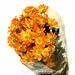 Chrysanthemum Bronce