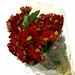 Chrysanthemum Kobber